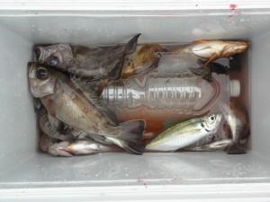 撃沈-広島遊漁船海斗