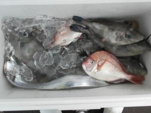 チダイ・ハゲ・タチウオ-広島遊漁船海斗