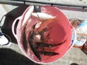 大ちゃんの釣りに行こう!-広島遊漁船海斗
