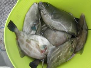 五目-広島遊漁船海斗