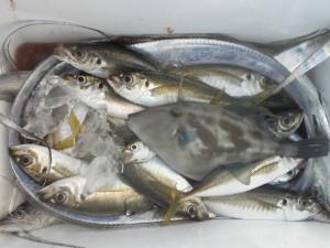 タチウオ・アジ・ハゲ-広島遊漁船海斗