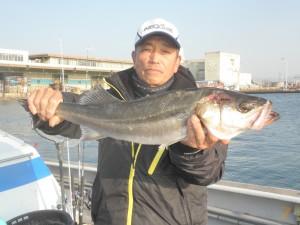 スズキ-広島遊漁船海斗