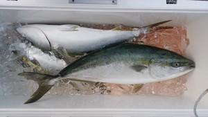 ブリ-広島遊漁船海斗