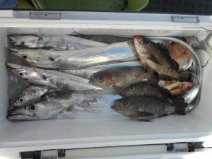 タチウオ・メバル-広島遊漁船海斗