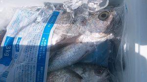 カマガリ-広島遊漁船海斗