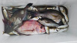 タイ・イサキ・ハゲ-広島遊漁船海斗