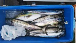 サワラ・サゴシ・ハマチ-広島遊漁船海斗