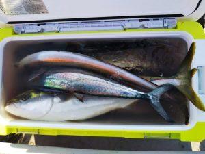 青物-広島遊漁船海斗
