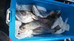 クログチ-広島遊漁船海斗