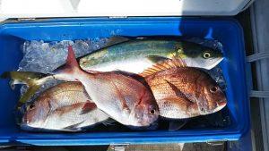 ハマチ・タイ-広島遊漁船海斗