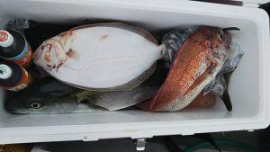 ハマチ・タイ・大口-広島遊漁船海斗