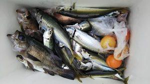 メバル・アジ-広島遊漁船海斗