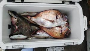 ハゲ・タイ-広島遊漁船海斗