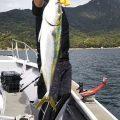 メジロ-広島遊漁船海斗