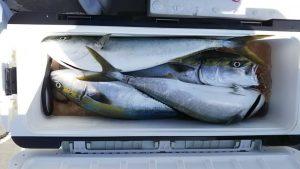 釣果-広島遊漁船海斗