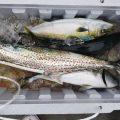 サワラ-広島遊漁船海斗