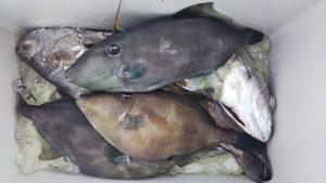 クログチ・ハゲ-広島遊漁船海斗