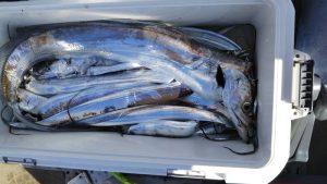 タチウオ・ウマズラハギ―広島遊漁船海斗