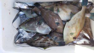 タチウオ・ウマヅラㇵギ―広島遊漁船海斗