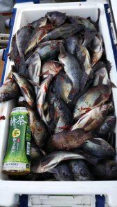 メバル―広島遊漁船海斗