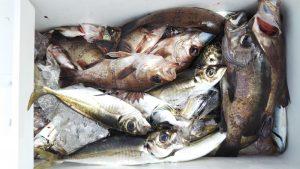 メバル・アジ―広島遊漁船海斗