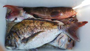 一つテンヤ―広島遊漁船海斗