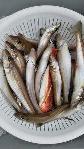 落とし込み・キスゴ―広島遊漁船海斗