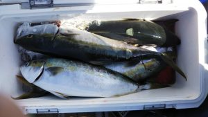 ライトジギング-広島遊漁船海斗